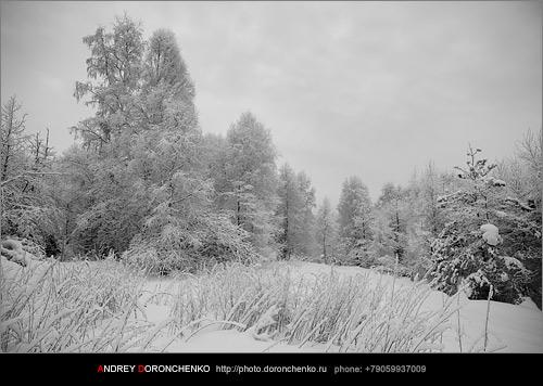 Фотограф Доронченко Андрей, Новокузнецк: зима.