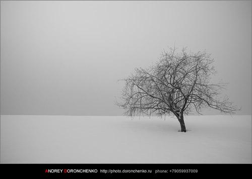 Фотограф Доронченко Андрей, Новокузнецк: Последний день зимы.
